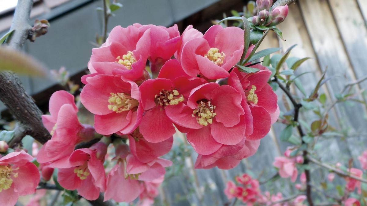 Цветение цветов