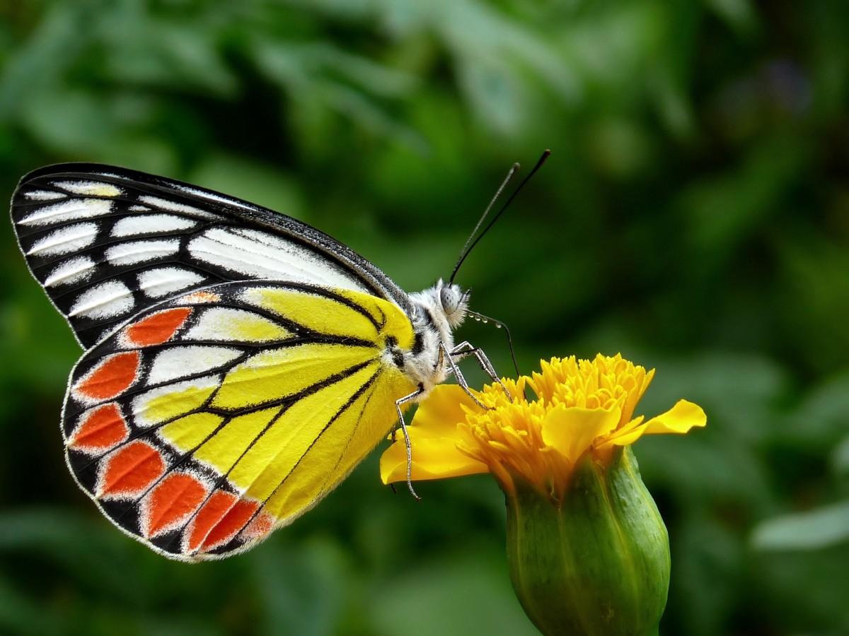 Images gratuites la nature fleur plante tige - Plante a fleur jaune 6 lettres ...