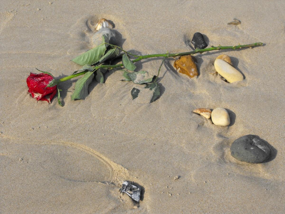 Gratis billeder : strand, sand, blad, blomst, elsker, fremstille ...