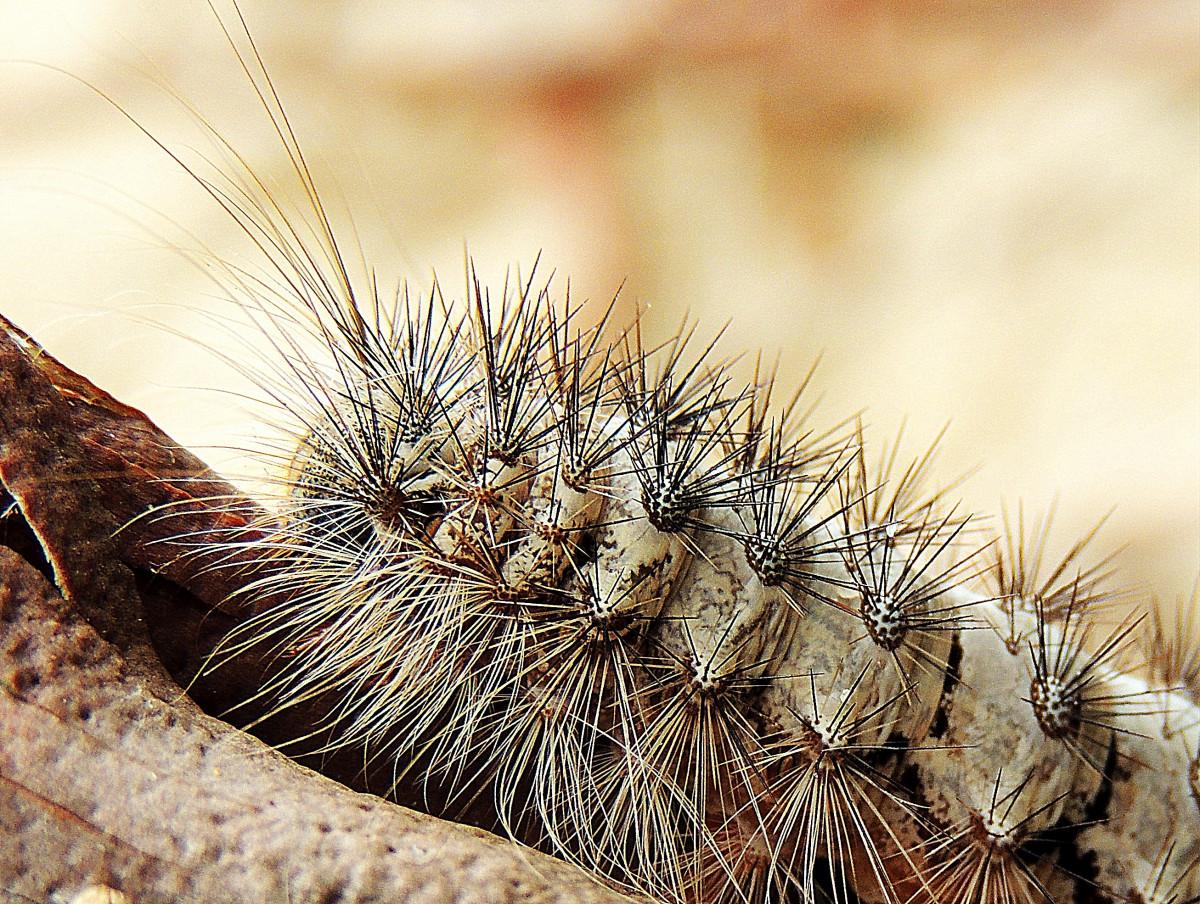 Fotos Gratis Madera Hoja Insecto Suelo Polilla Agricultura  ~ Como Son Las Polillas De La Madera