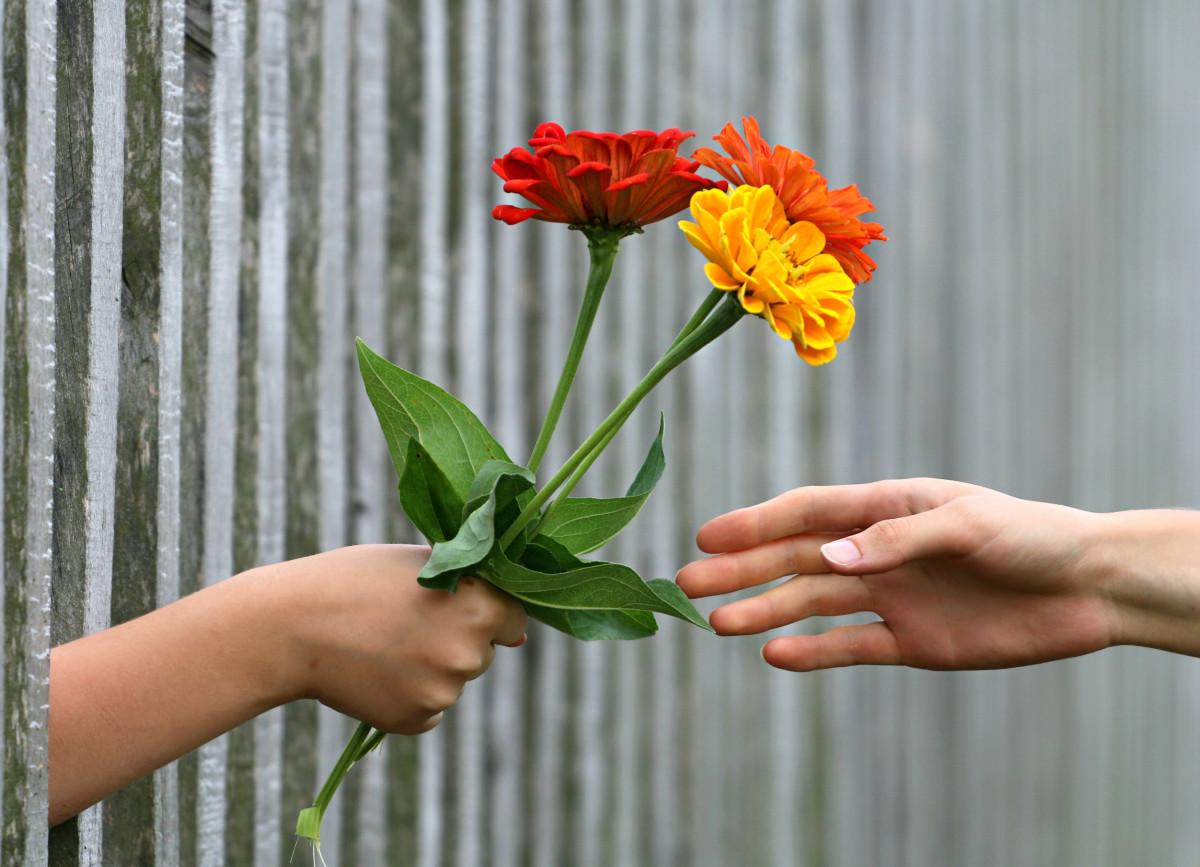 Images Gratuites Main Cloture Fleur Petale Cadeau Botanique