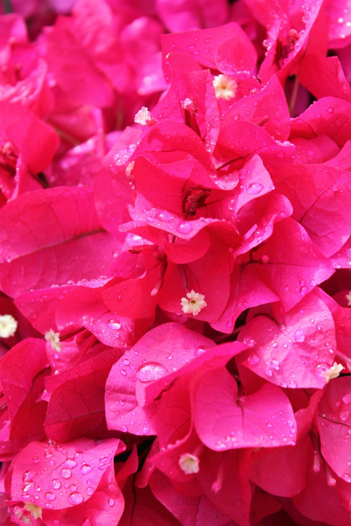 Free Images : blossom, texture, flower, petal, bloom ...