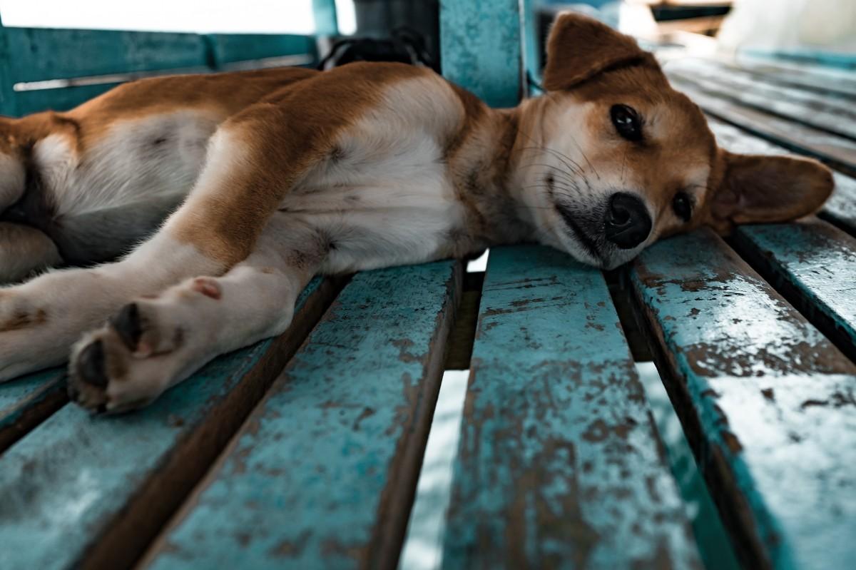 La 'Patrulla Canina' de Molina del Segura