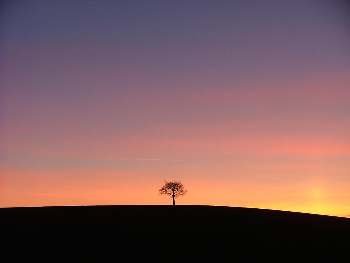Gratis Afbeeldingen Landschap Boom Horizon Silhouet