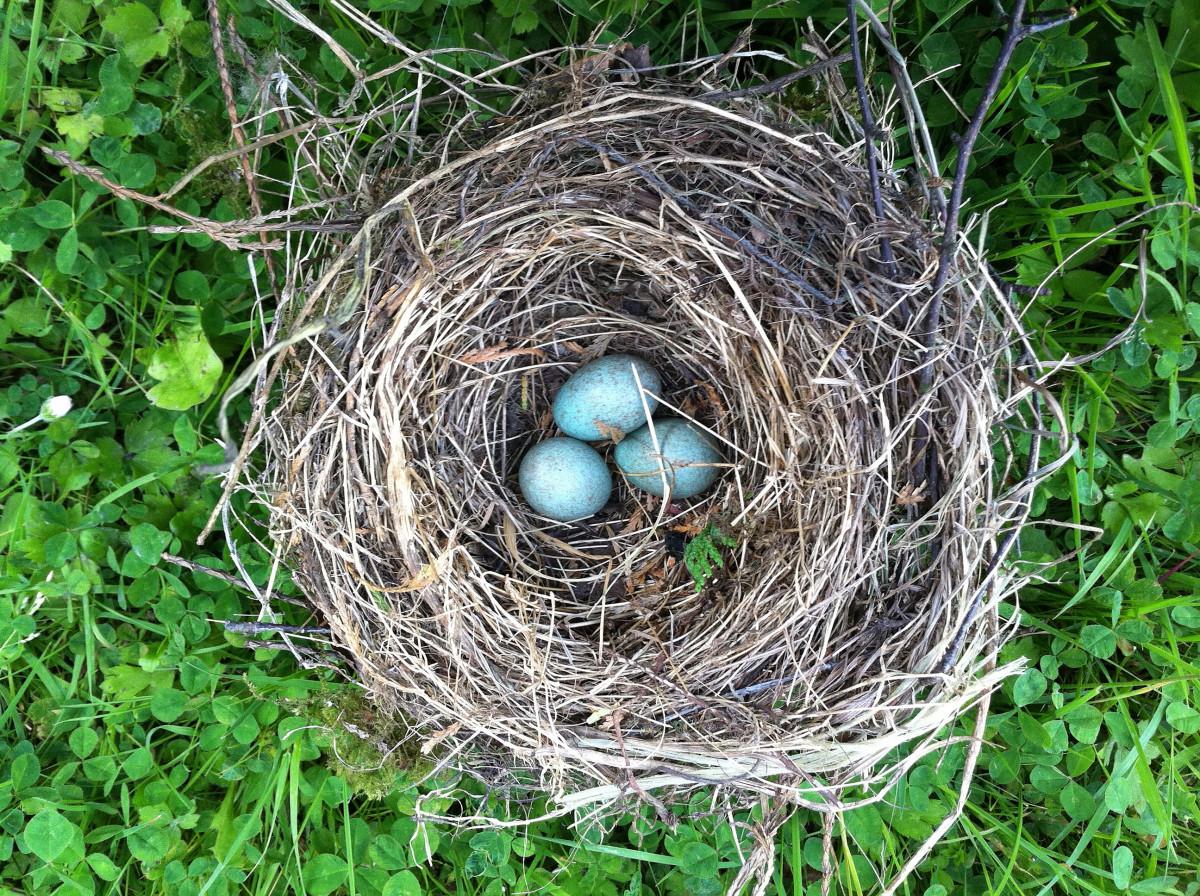 фото картинки гнезда птиц можно