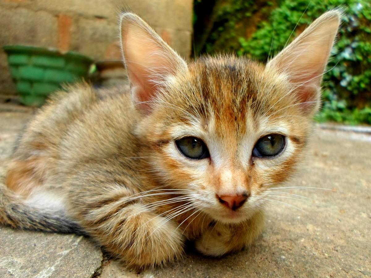 treatment kitten diarrhea