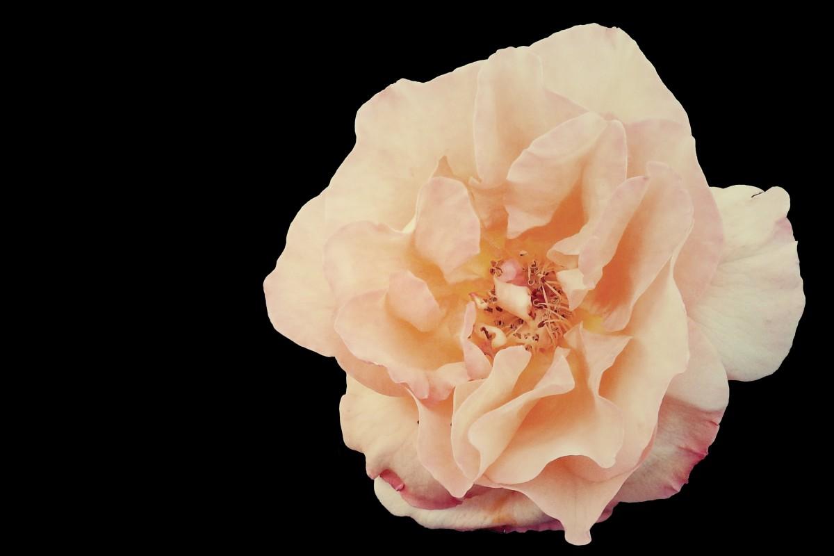 Blossom plant white flower petal bloom