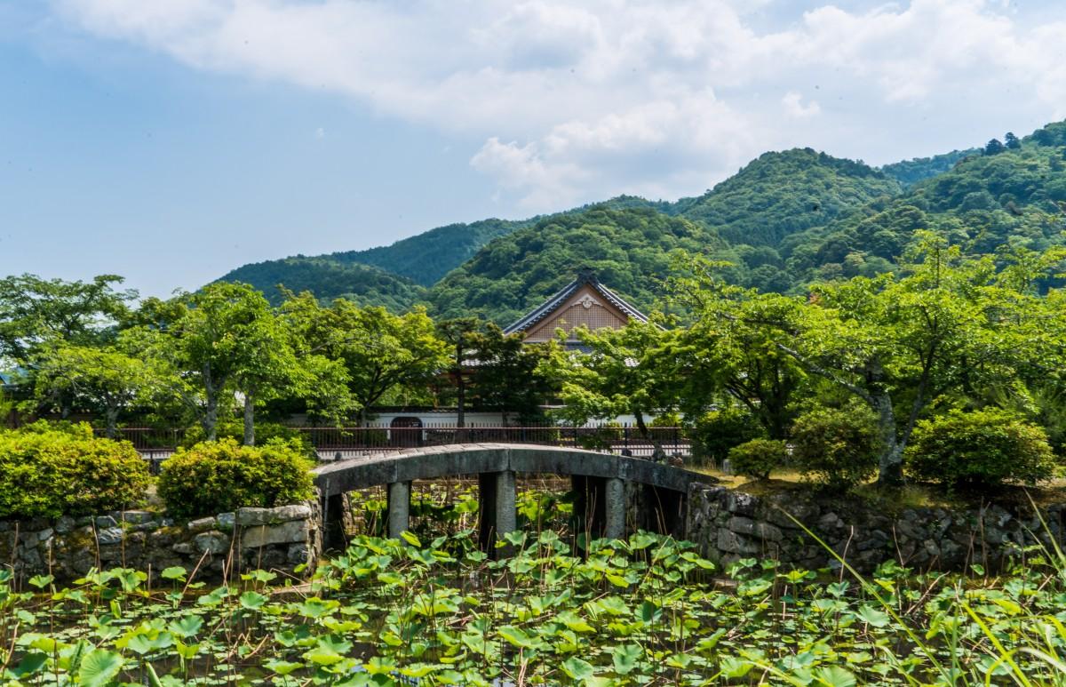 Images gratuites paysage arbre eau la nature for t for Hotel jardin de fleurs kyoto