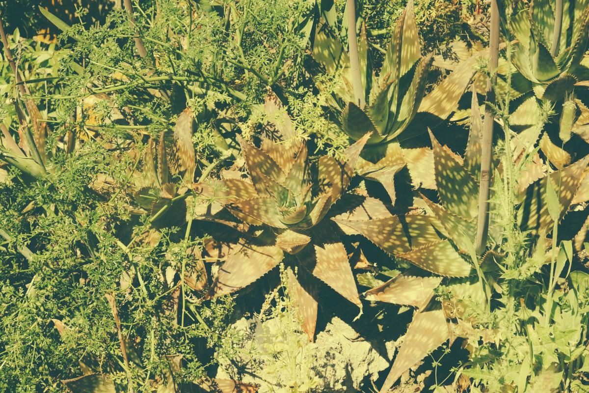 Fotograf Agac Yaprak Cicek Orman Mahsul Sonbahar Botanik