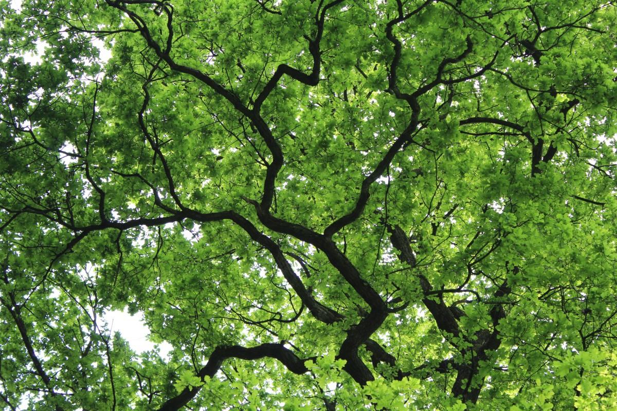картинки деревья серо зеленые чем