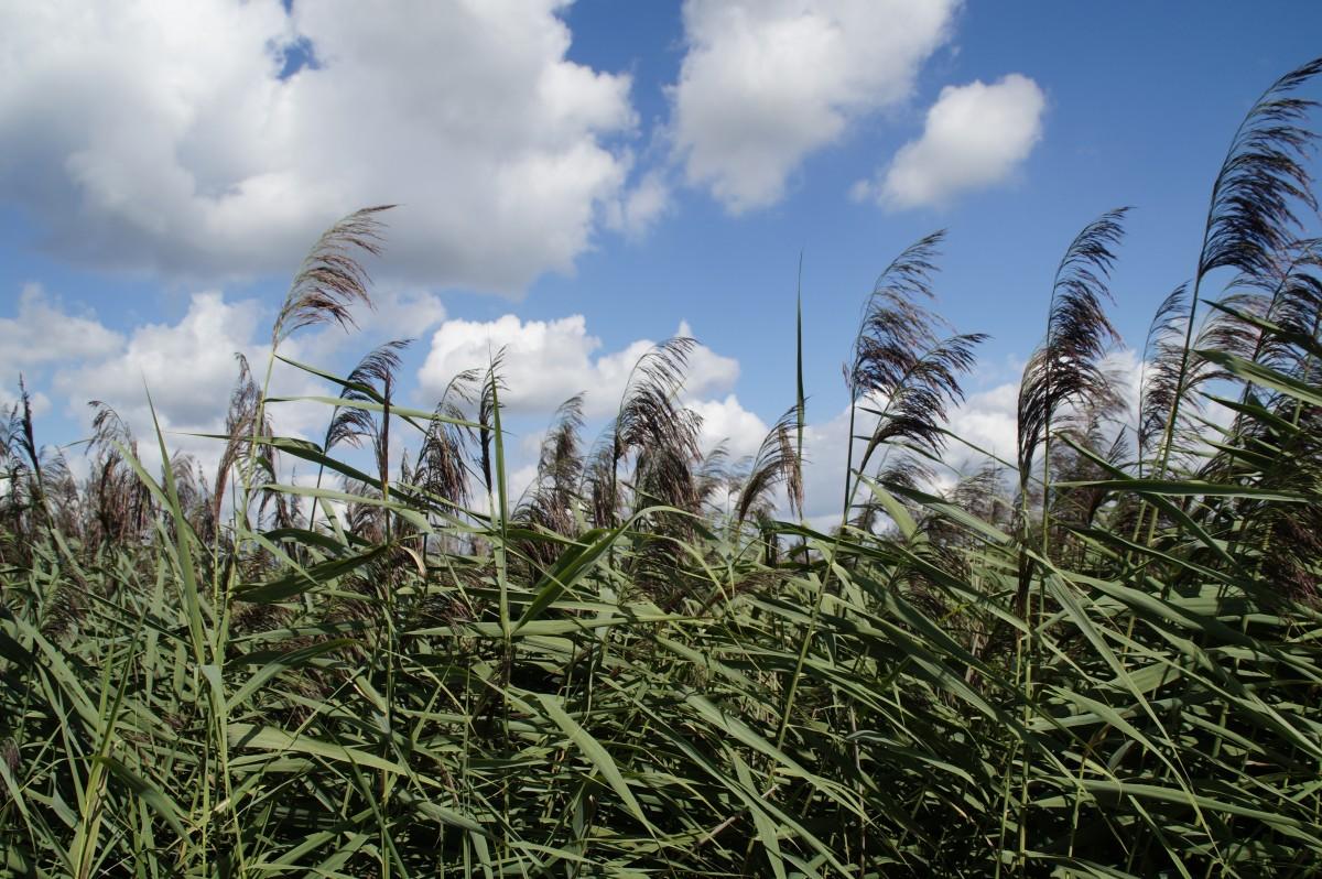 images gratuites paysage la nature herbe zones humides marais pelouse prairie prairie. Black Bedroom Furniture Sets. Home Design Ideas