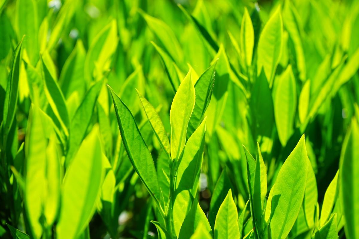Fotos gratis c sped campo prado hoja flor arbusto for Vegetacion ornamental