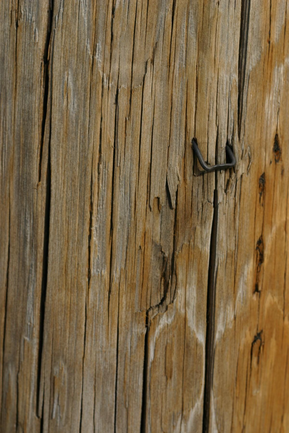 무료 이미지 : 자연, 분기, 조직, 널빤지, 트렁크, 벽, 흙, 재목 ...