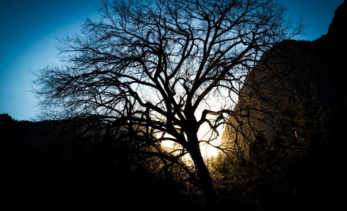 sun fog sunrise trees - photo #28