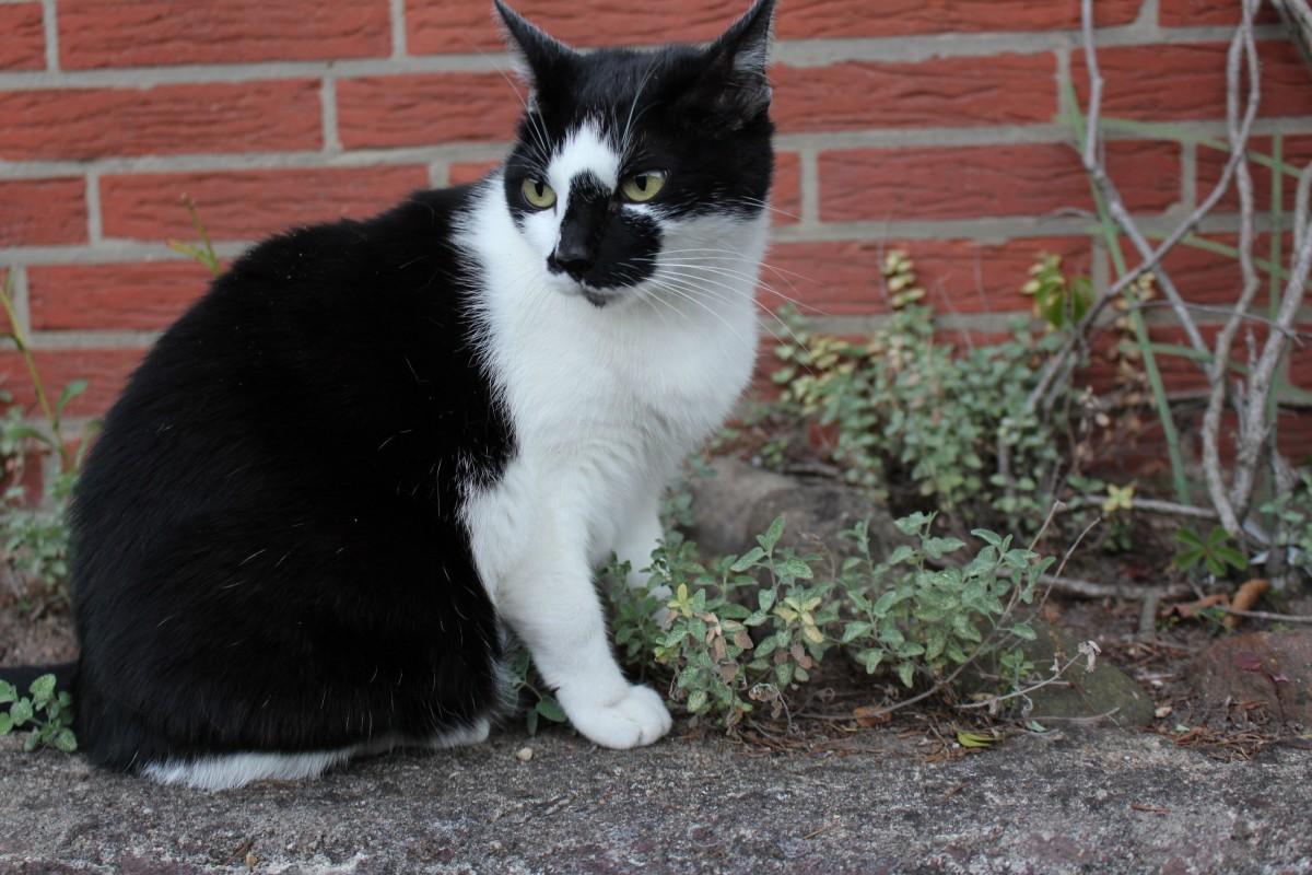 kvapká čierna mačička pics Teen análny XXX Sex