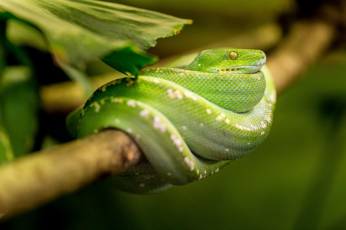 images gratuites la nature feuille animal zoo portrait vert jungle macro reptile. Black Bedroom Furniture Sets. Home Design Ideas