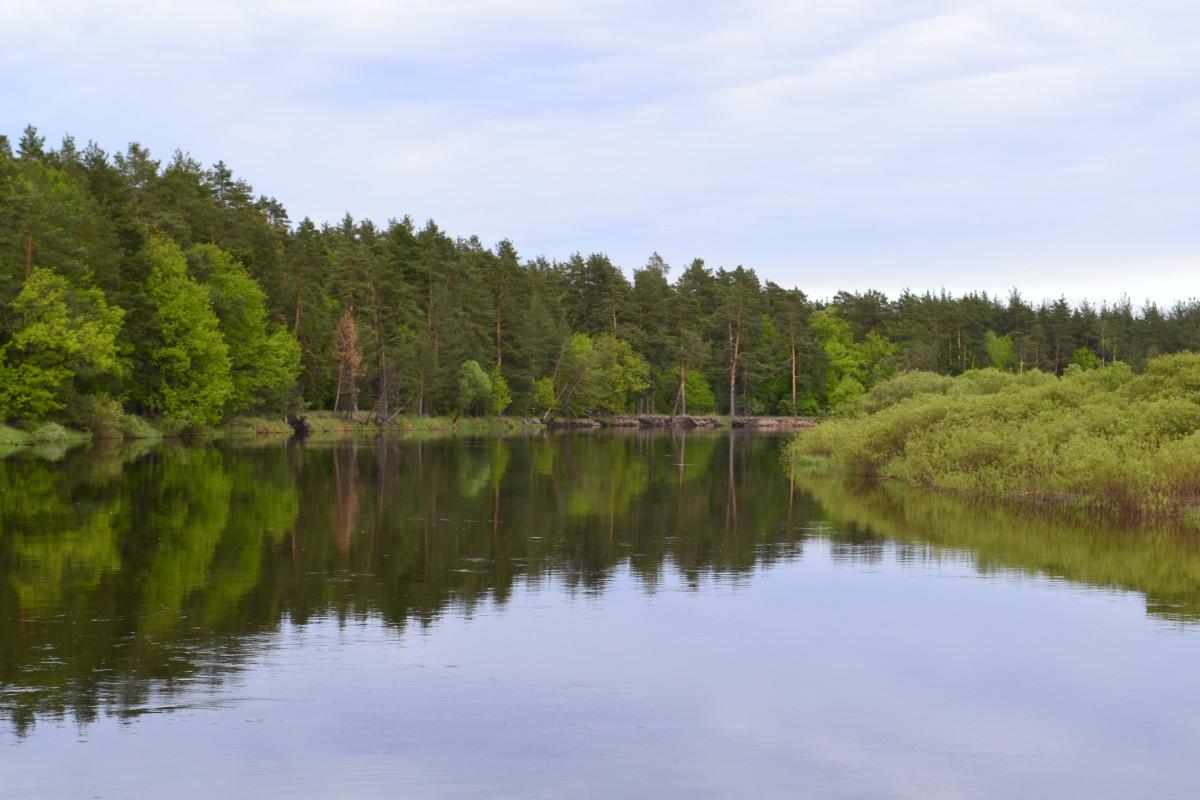 Free images tree marsh lake river reflection for Blue marsh lake fishing