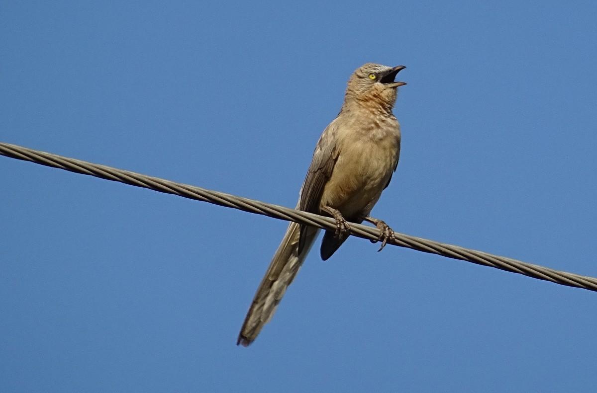 polykání velkého ptáka