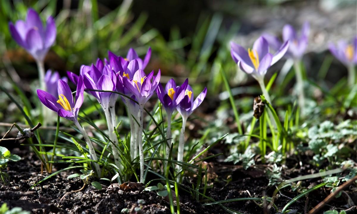 Картинка цветка гладиолус думают