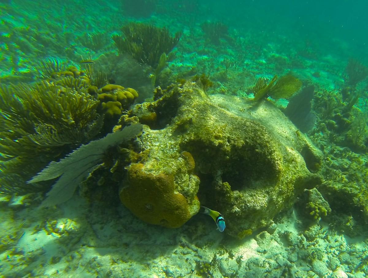 Free images sea ocean aquatic coral reef snorkel for Sea water fish