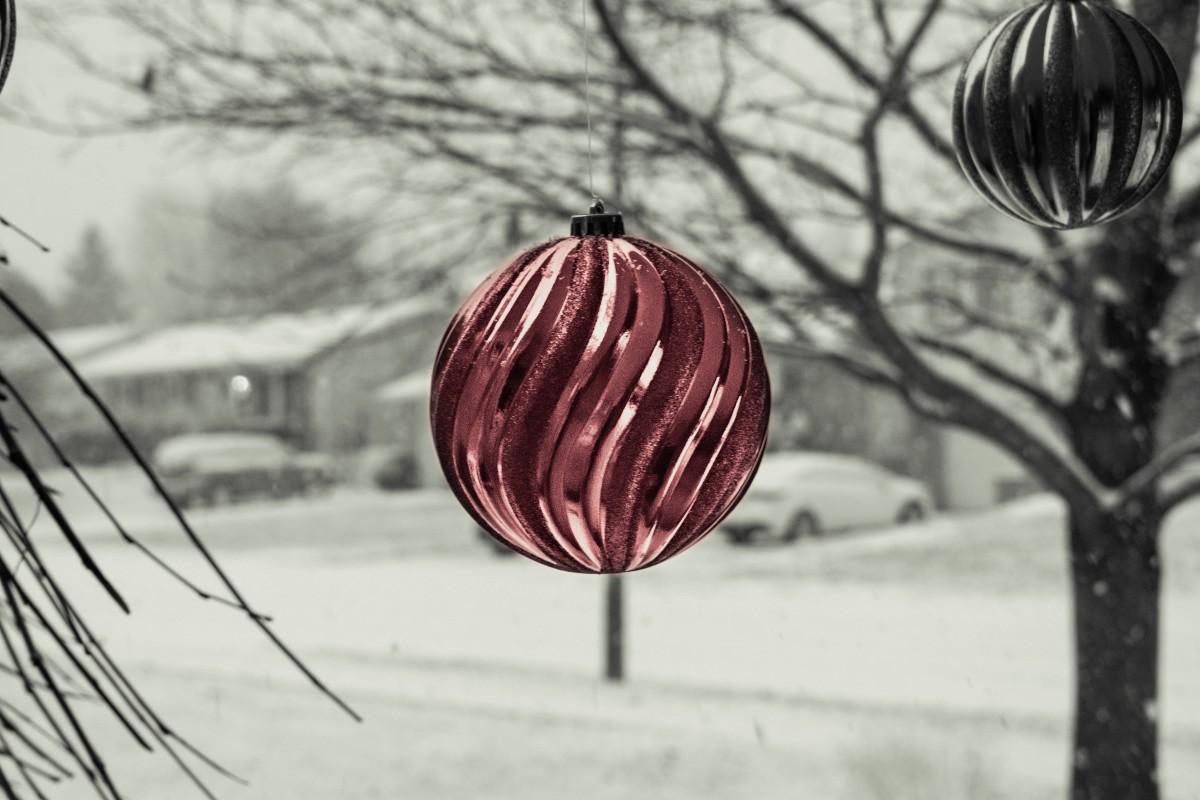 Fotos Gratis : árbol, Bosque, Rama, Nieve, Invierno, En