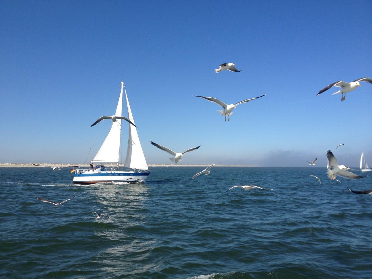 картинка чайки над морем