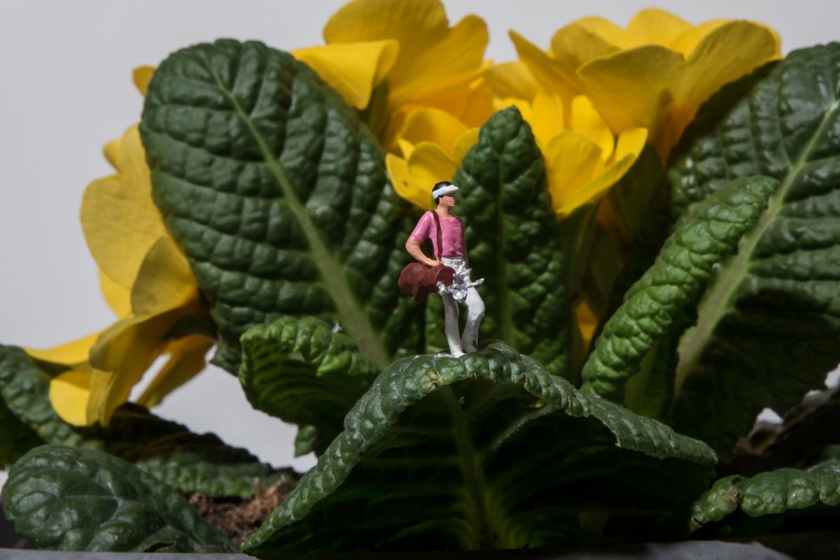 beche jardin