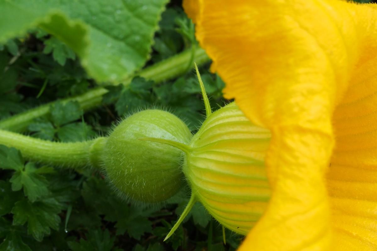 Images gratuites feuille fleur floraison t for Plante 9 feuilles