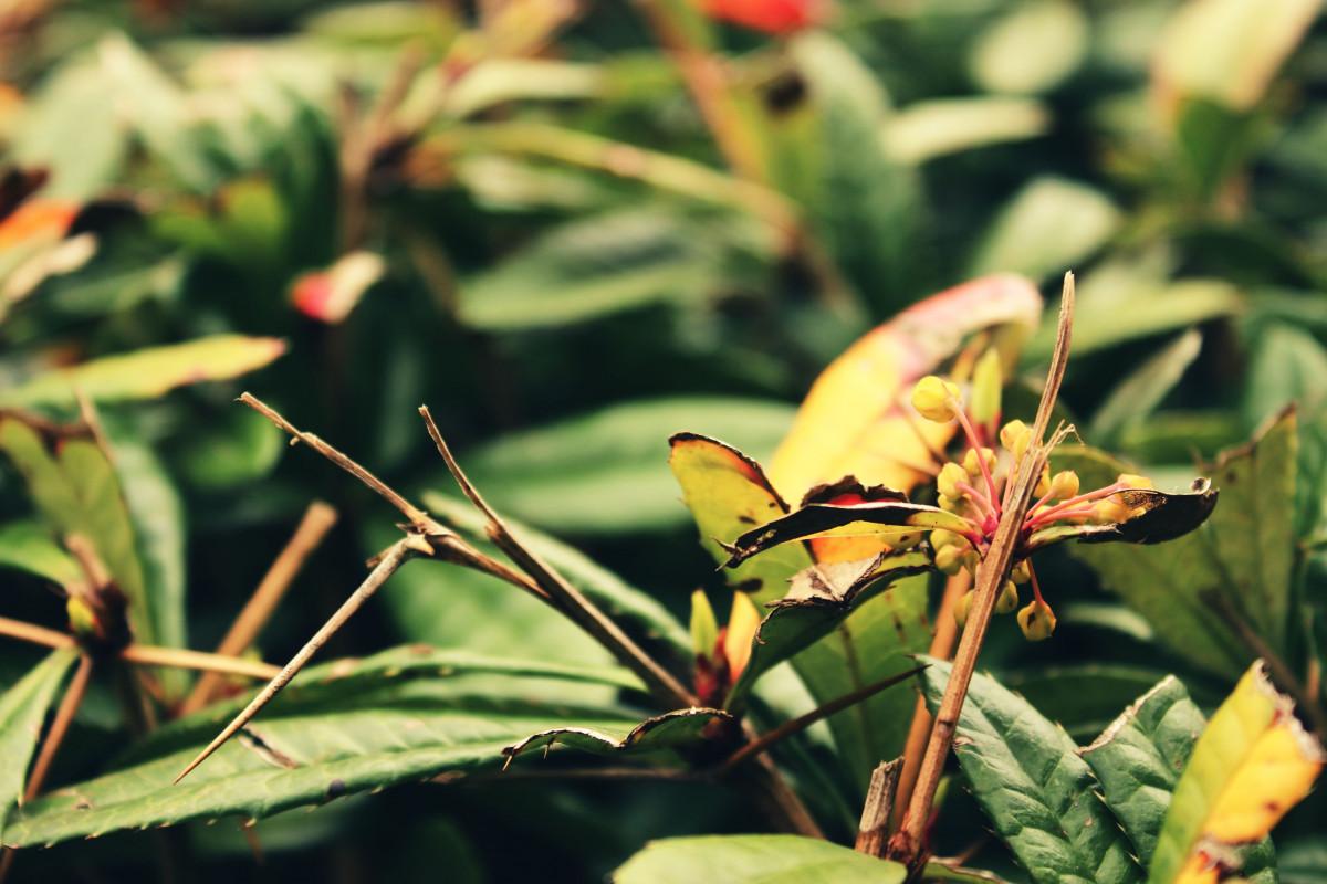 images gratuites la nature herbe la photographie fleur t buisson feuillage vert. Black Bedroom Furniture Sets. Home Design Ideas