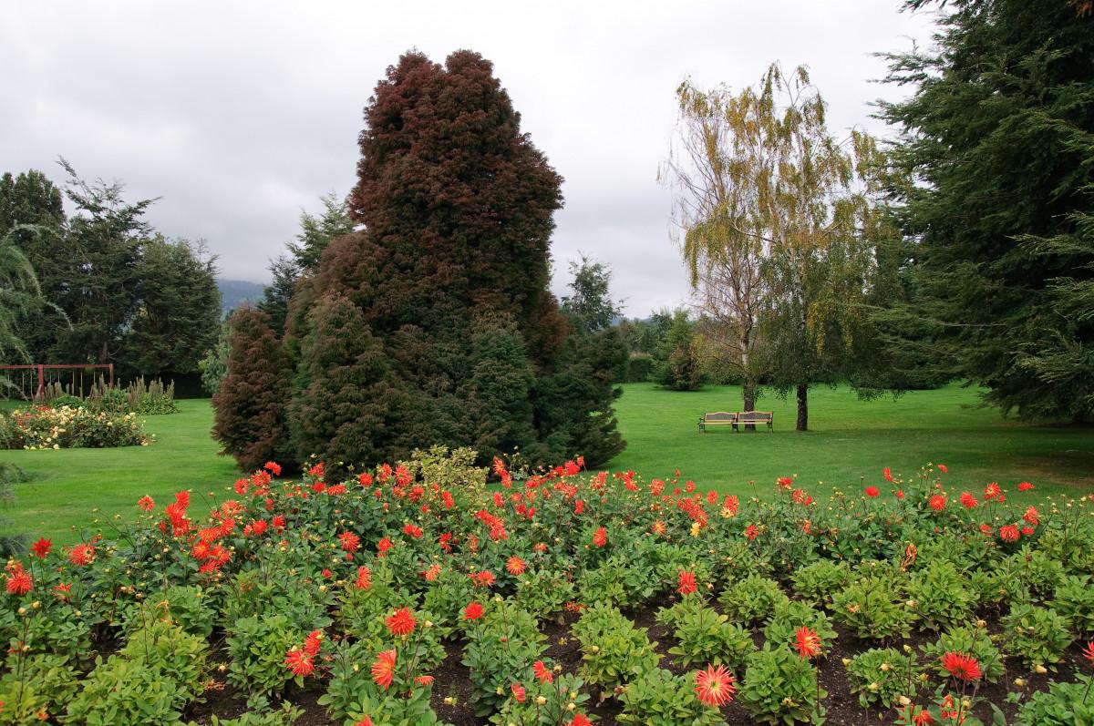 Купить цветы и кустарники ботанический сад владивосток, оптом тюльпаны брянск
