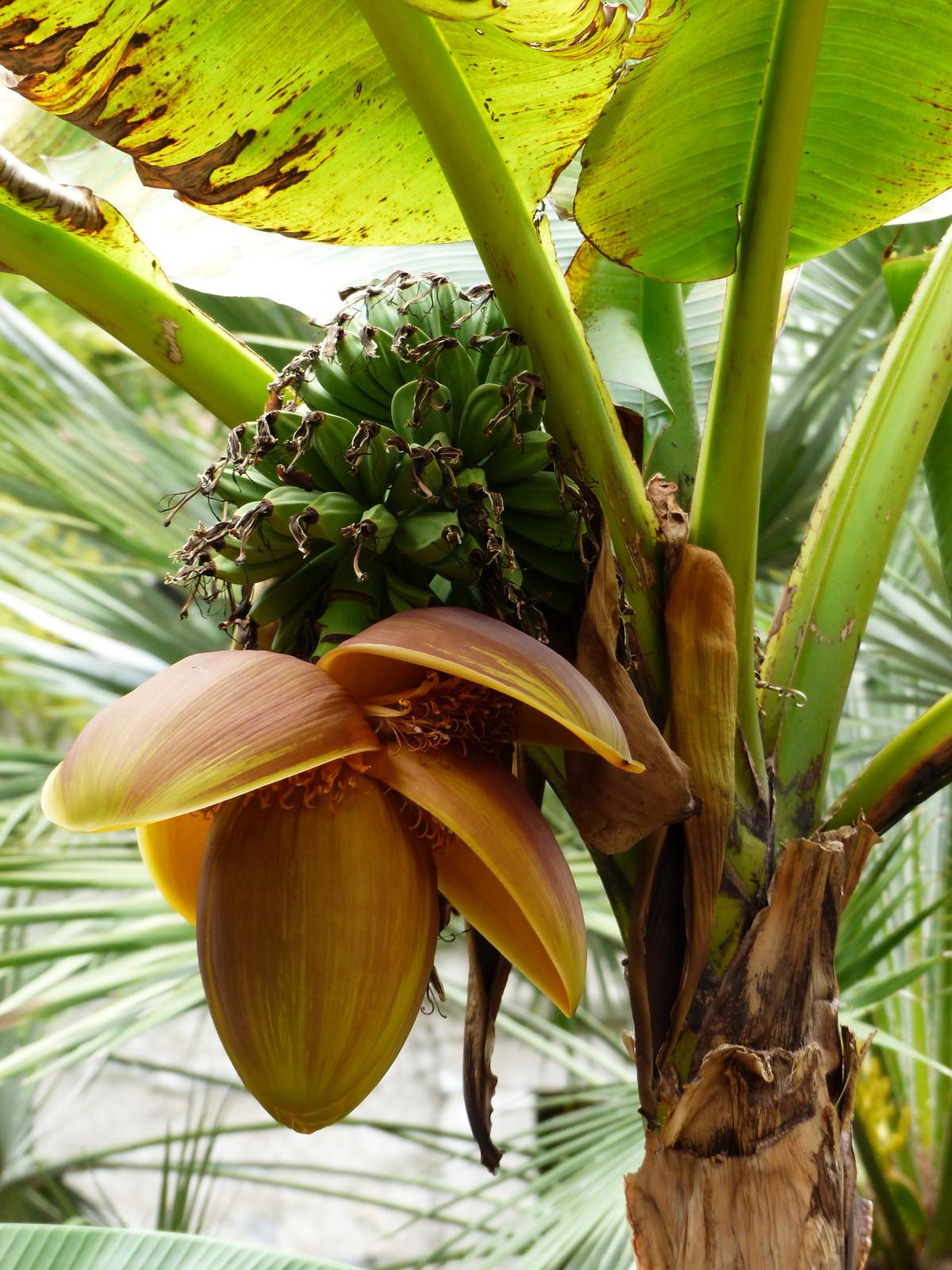 kostenlose foto frucht blume lebensmittel gr n dschungel produzieren botanik fr chte. Black Bedroom Furniture Sets. Home Design Ideas