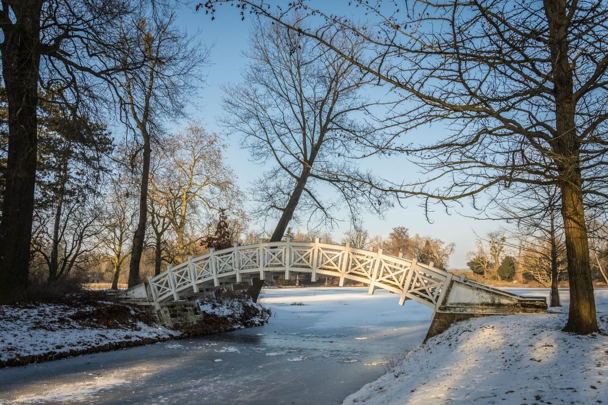 Images gratuites paysage arbre la nature neige du - Photos de neige gratuites ...