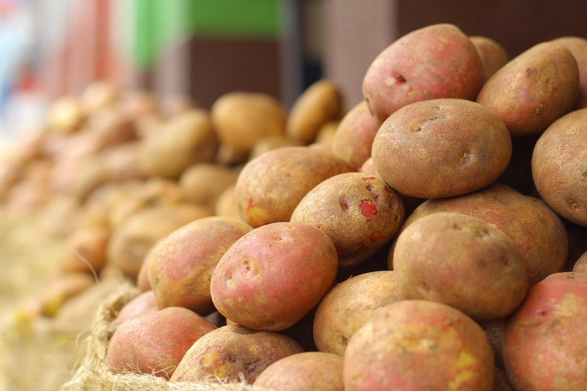 Овощной бизнес или О том куда сбыть выращенные на