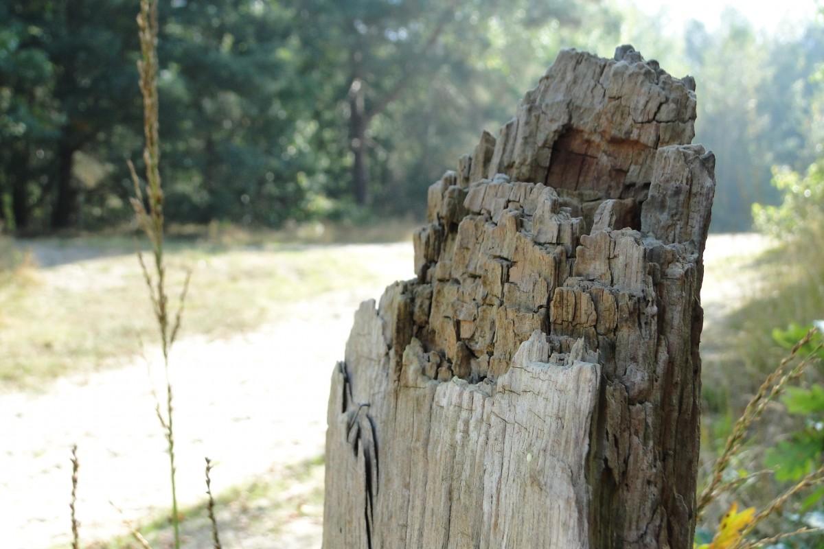 Kostenlose foto : Baum, Weg, Zeit, Grün, Garten, Skulptur ...