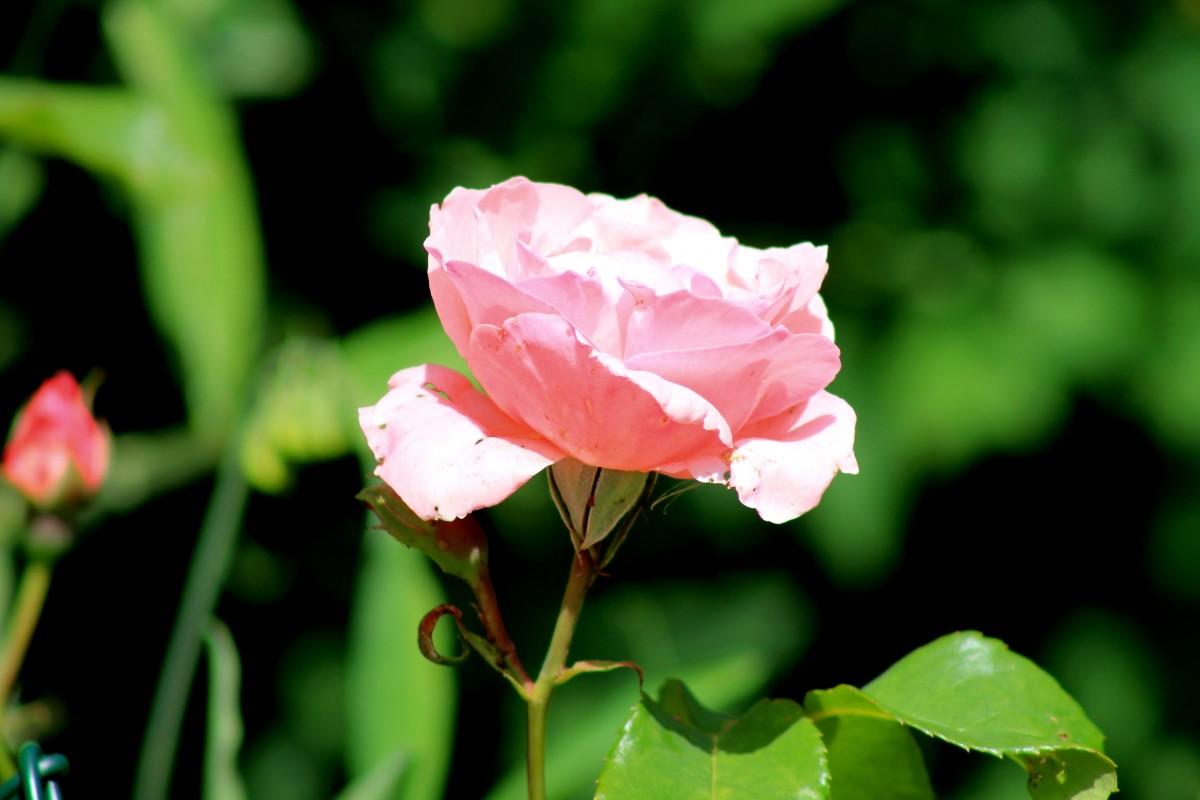 Цветы на кусте