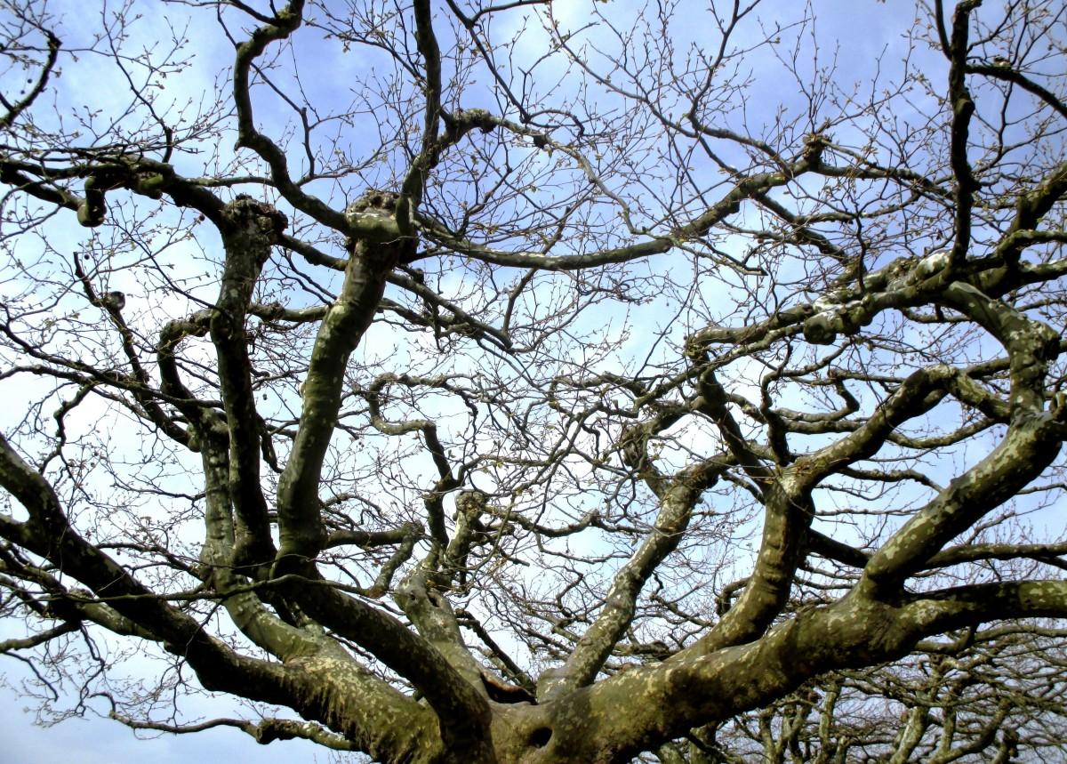 Images gratuites arbre la nature for t branche fleur - Arbres a feuilles caduques ...