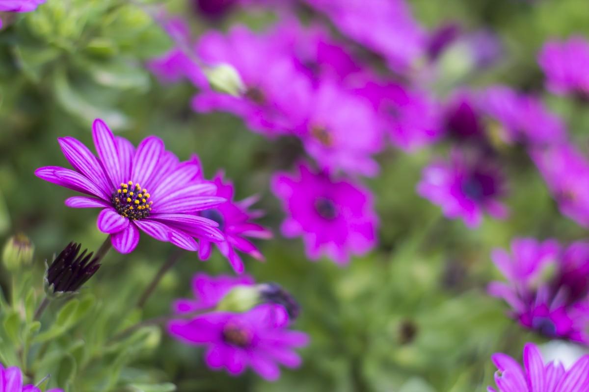 kostenlose foto natur bl hen wiese blume lila bl tenblatt kraut botanik flora. Black Bedroom Furniture Sets. Home Design Ideas