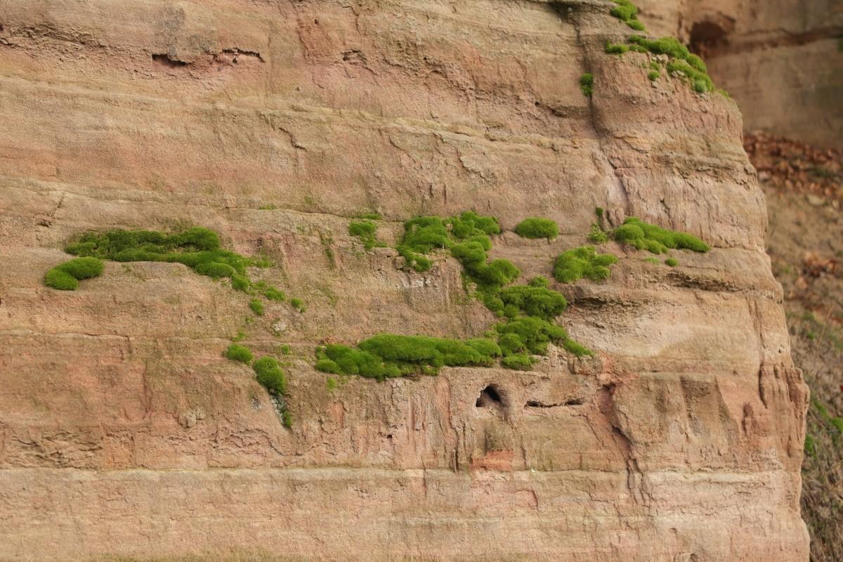 la nature Roche mur grès mousse falaise sol terrain Matériel géologie affleurement Badlands tourbière oued substrat rocheux histoire ancienne Dosh Calcaire