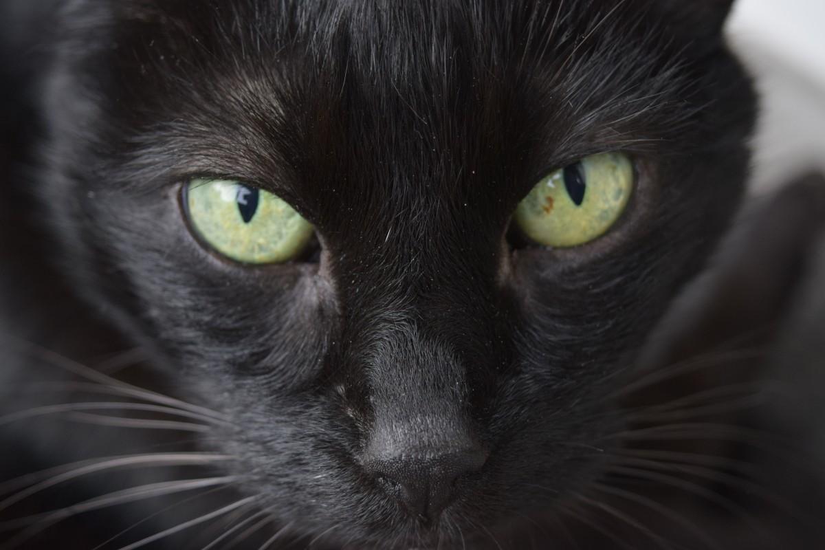 Horúce čierne ebonys