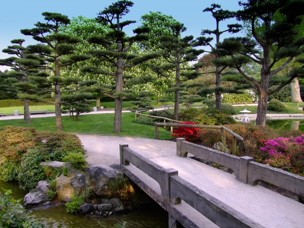 Fotos gratis paisaje planta c sped flor estanque for Estanque reflectante