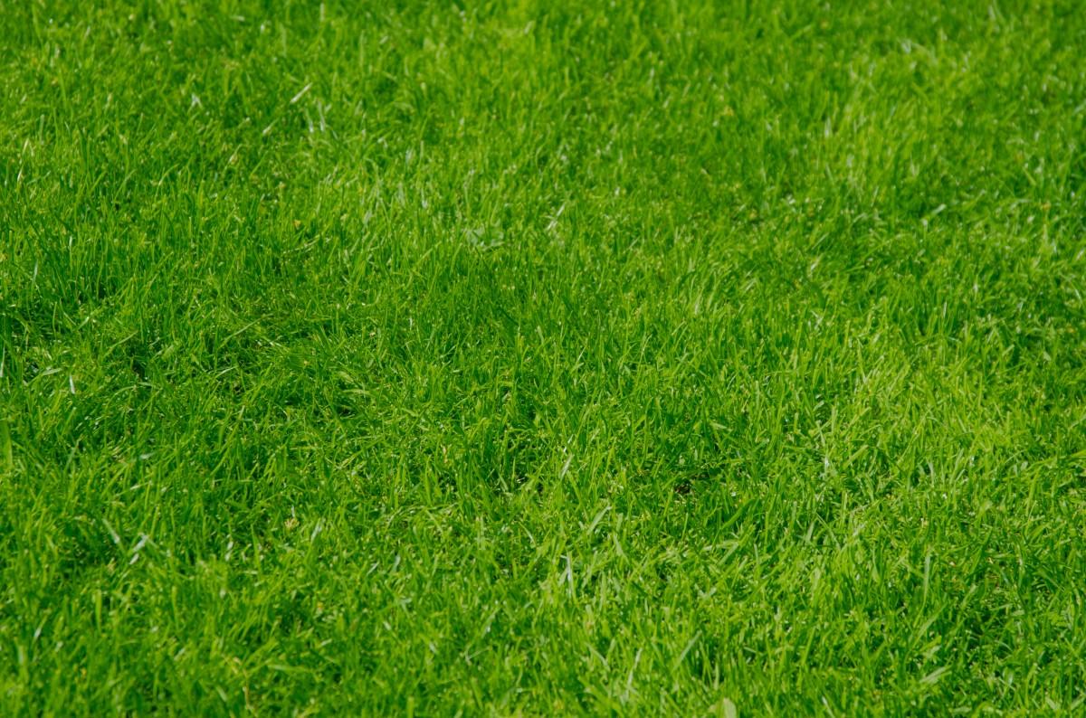 Images gratuites la nature herbe plante champ pelouse prairie prairie environnement - Quand planter de la pelouse ...