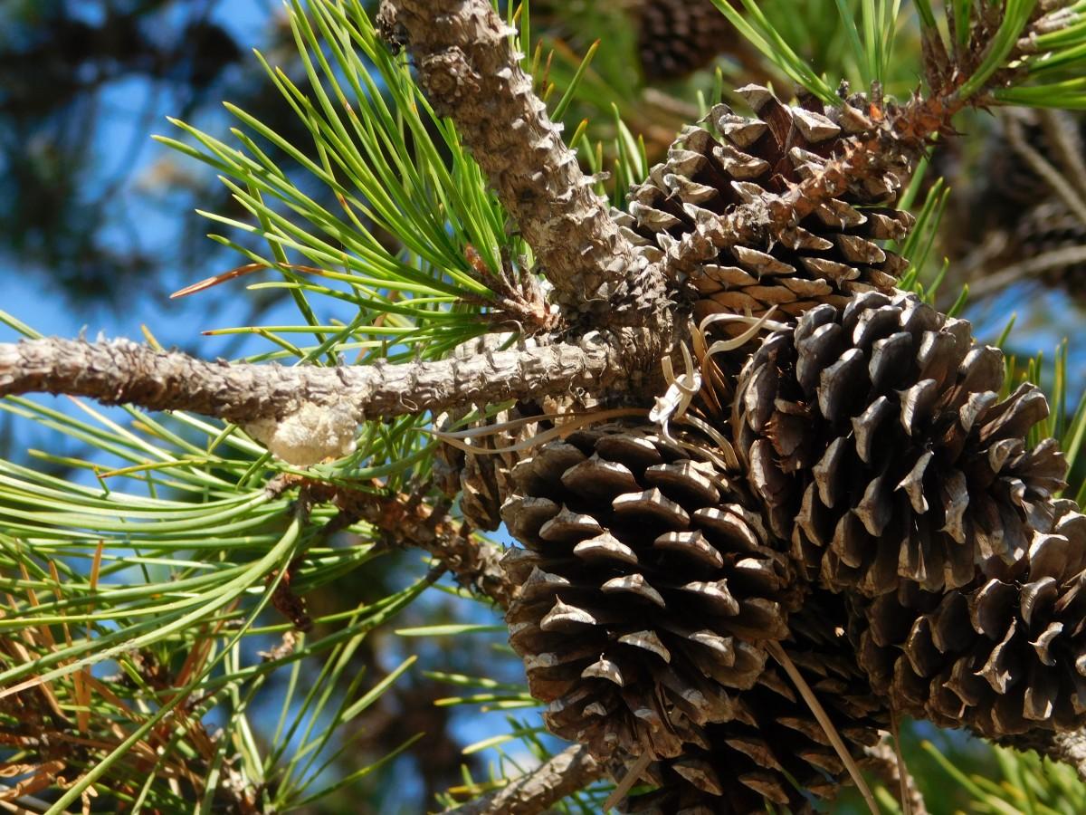 Fotos gratis rbol naturaleza rama planta hojas for Ejemplos de arboles de hoja perenne