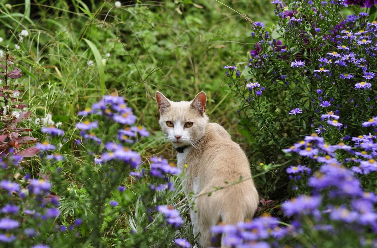 Images gratuites arbre herbe pelouse feuille fleur animal de compagnie vert jungle l - Herbe a chat plante ...