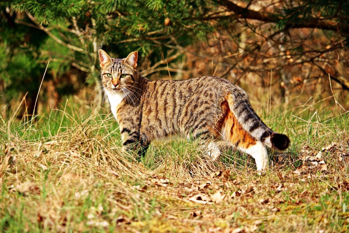 всем фото домашних котов на природе володи