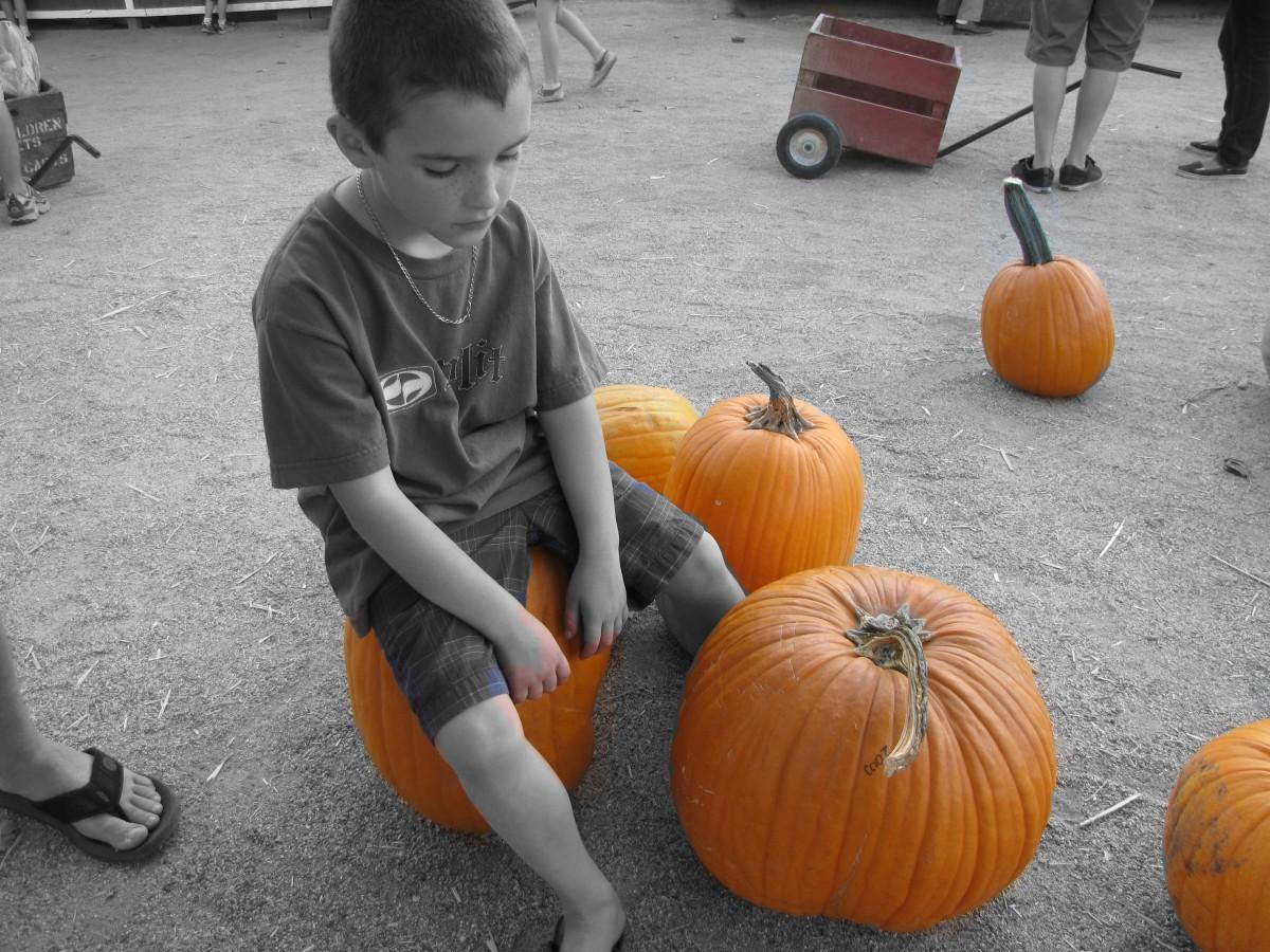 free images boy kid produce pumpkin child jackolantern