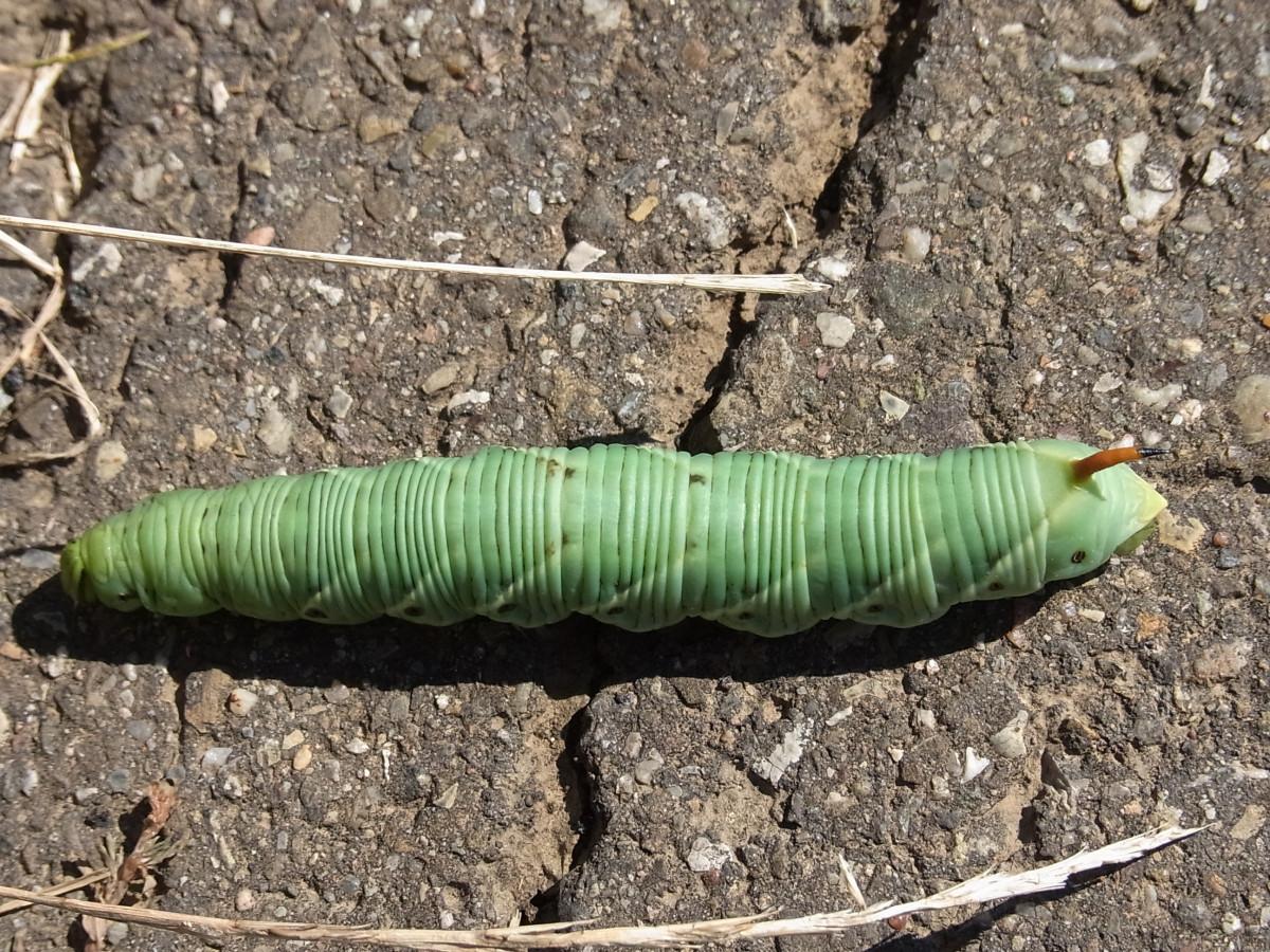 Бабочка фото крупным планом 6