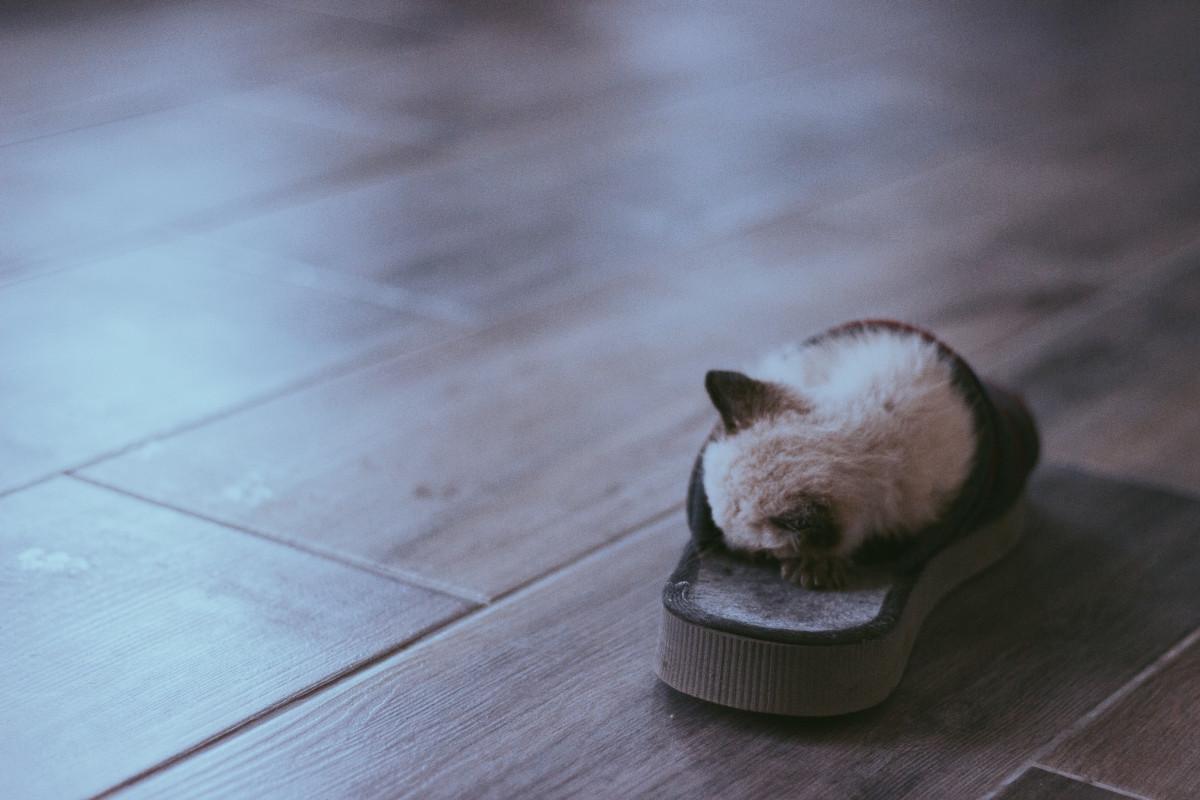 piso animal linda gatito gato mamífero zapatilla bigotes vertebrado Gatos pequeños a medianos