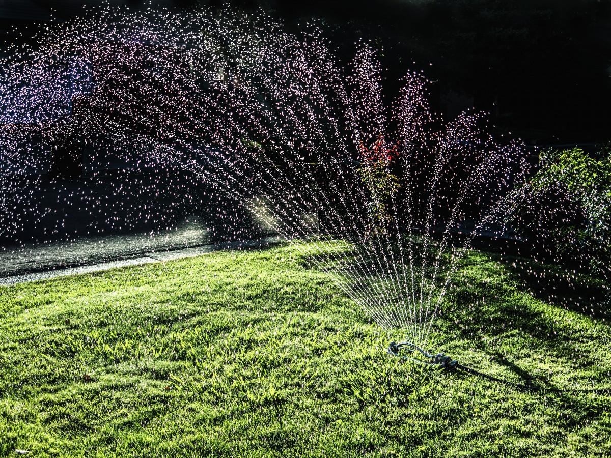 agua, césped, planta, césped, luz de sol, hoja, flor, verano, verde, jardín, arbusto, aspersor, yarda, Regar