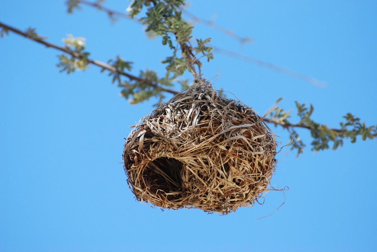 гнездо птиц фото изготовленные