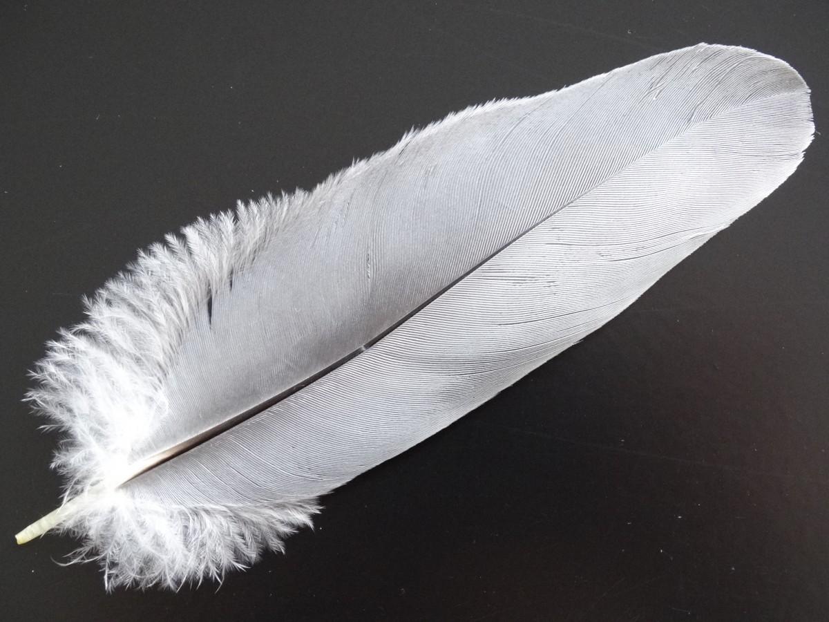 Птичьи перья картинки